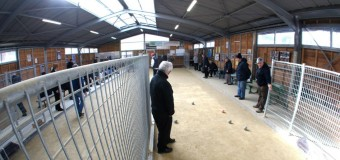 Saint-Malo(35) : 117 adhérents à l'association du Club bouliste de Rochebonne Paramé